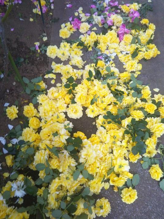 咲きがら摘み1.JPG